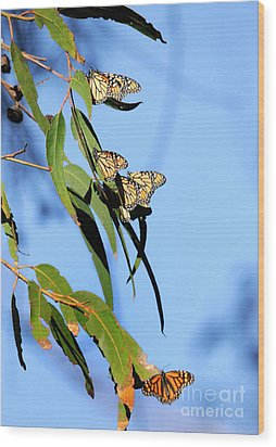 Butterflies Wood Print by Marc Bittan