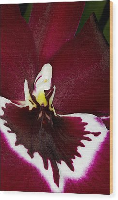 Exotic Orchid Flowers Of C Ribet Wood Print by C Ribet