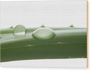 Aloe Vera Wood Print by Blink Images