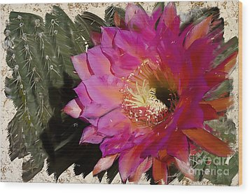 Cactus Flower  Wood Print by Jim and Emily Bush