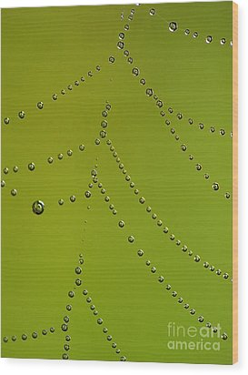 Drops In Spiderweb Wood Print by Odon Czintos