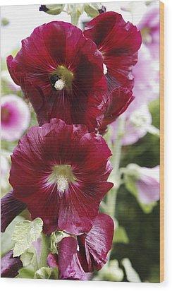 Hollyhock (alcea Rosea) Wood Print by Dr Keith Wheeler