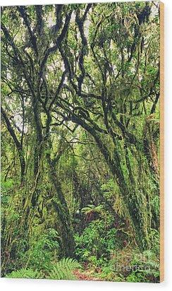 Native Bush Wood Print by MotHaiBaPhoto Prints