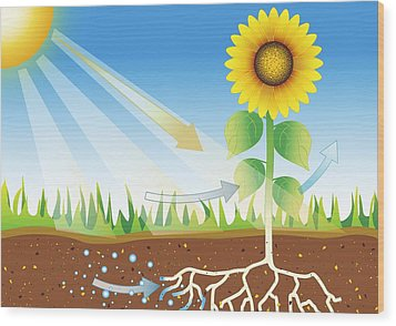 Photosynthesis, Artwork Wood Print by David Nicholls