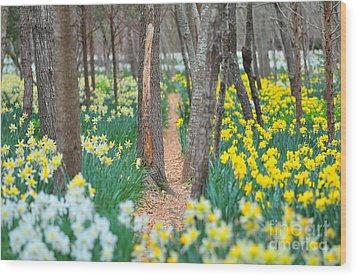 Secret Places Wood Print by Catherine Reusch  Daley