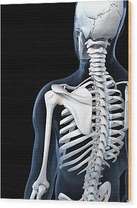 Shoulder Anatomy, Artwork Wood Print by Sciepro