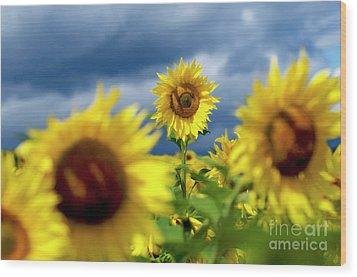 Sunflowers Wood Print by Bernard Jaubert