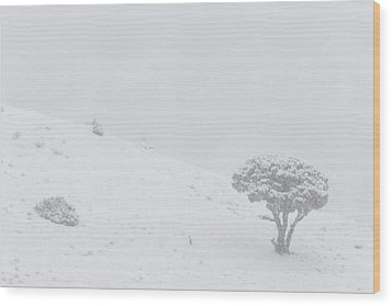Yellowstone Park Wyoming Winter Snow Wood Print by Mark Duffy