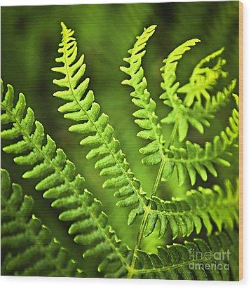 Fern Leaf Wood Print by Elena Elisseeva