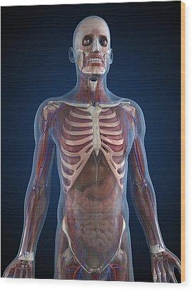 Male Anatomy, Artwork Wood Print by Sciepro