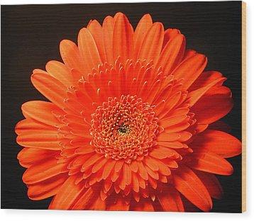 3291 Wood Print by Kimberlie Gerner
