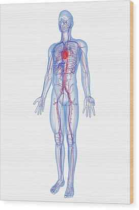 Cardiovascular System, Artwork Wood Print by Sciepro