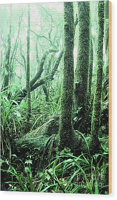 El Yunque National Forest Wood Print by Thomas R Fletcher