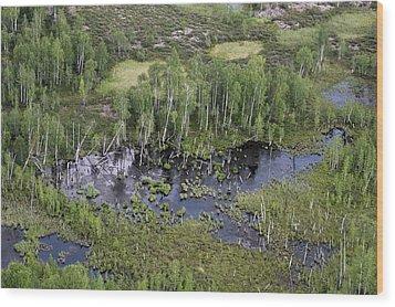 Tunguska Forest Wood Print by Ria Novosti