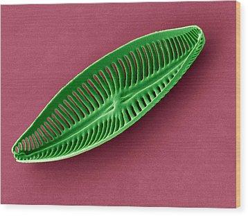 Diatom, Sem Wood Print by Steve Gschmeissner