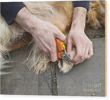 Dog Grooming Wood Print by Photo Researchers, Inc.