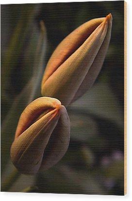 Tulips Wood Print by Odon Czintos