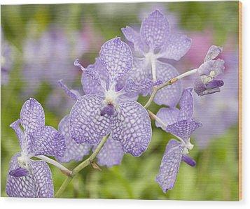 Orchid Flower Bloom Wood Print by C Ribet