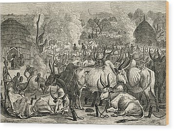 A Dinka Cattle Park, Southern Sudan Wood Print by Ken Welsh