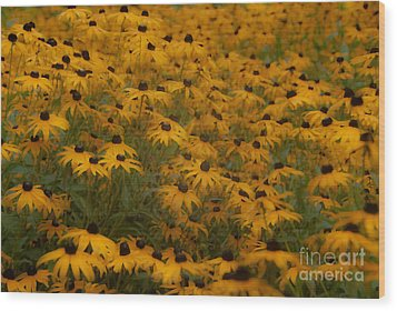 A Field Full Of Flowers Wood Print by Michael Rucci