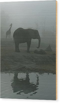 A Giraffe And Elephant Live In The Same Wood Print by Michael Nichols