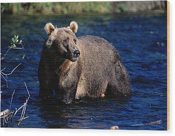 A Kodiak Brown Bear Wades In An Alaska Wood Print by George F. Mobley