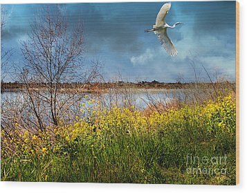 A Moment In Time In The Journey Of The Great White Egret . 7d12643 Wood Print by Wingsdomain Art and Photography