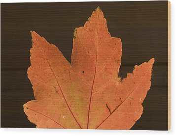 A Vibrant Colored Leaf Wood Print by Joel Sartore