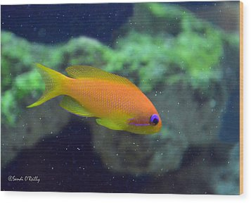 African Anthias Wood Print by Sandi OReilly