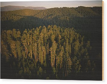 Afternoon Sunlight Bathes Redwood Trees Wood Print by James P. Blair