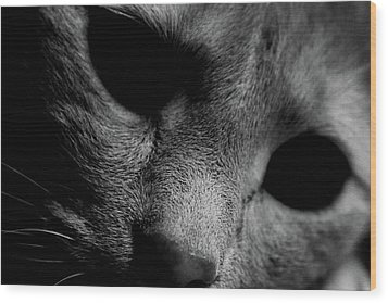 Alfie Two Wood Print by Jerry Cordeiro