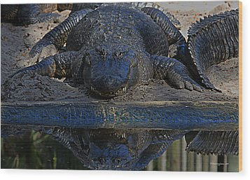Alligator And Reflection Wood Print by Dorothy Cunningham