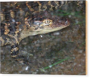 Alligator Wood Print by Suhas Tavkar