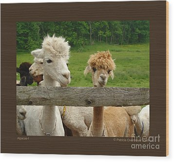Alpacas-i Wood Print by Patricia Overmoyer