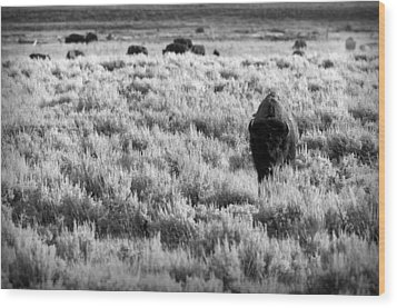 American Bison In Black And White Wood Print by Sebastian Musial