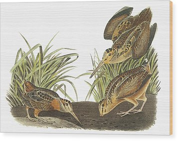 American Woodcock Wood Print by John James Audubon
