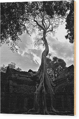 Ancient Tree Wood Print by Arj Munoz