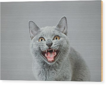 Angry Kitten Wood Print by Waldek Dabrowski