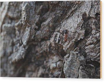 Ant Wood Print by Pan Orsatti