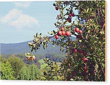 Apples On A Tree Wood Print by Susan Leggett