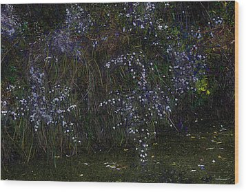 Aster Days Wood Print by Ron Jones