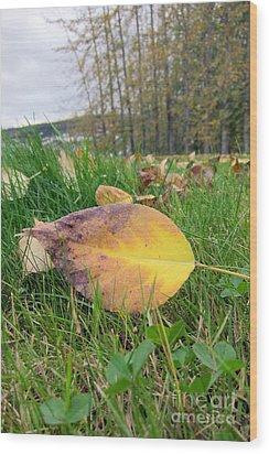 Autumn Leaf On Green Wood Print by Michelle Bergersen