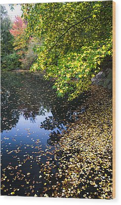 Autumn Tree Colors In Central Park In New York City Wood Print by Ellie Teramoto