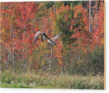 Autumn Vermont Geese And Color Wood Print by Deborah Benoit