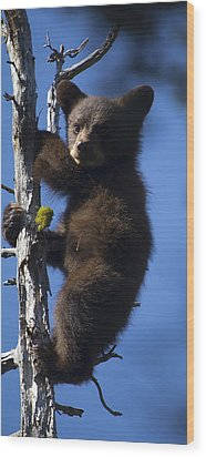 Baby Bear Wood Print by Clinton Nelson