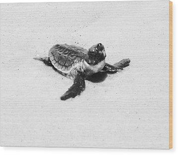 Baby Sea Turtle  Wood Print by Lillie Wilde