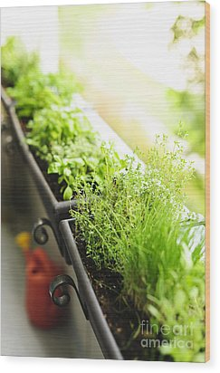 Balcony Herb Garden Wood Print by Elena Elisseeva