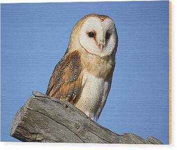 Barn Owl Wood Print by Paulette Thomas