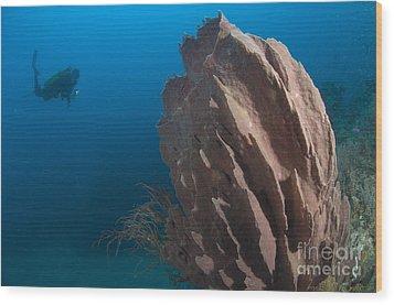 Barrel Sponge And Diver, Papua New Wood Print by Steve Jones