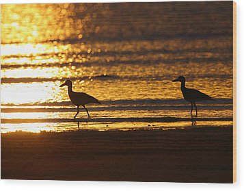 Beach Stone-curlews At Sunset Wood Print by Bruce J Robinson